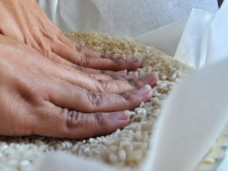 הידוק האורז